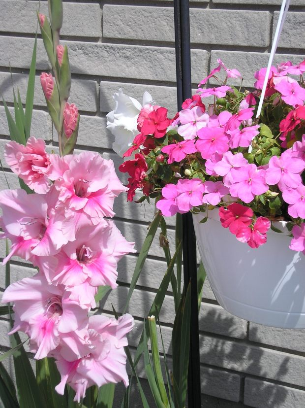 Glads and Impatiens