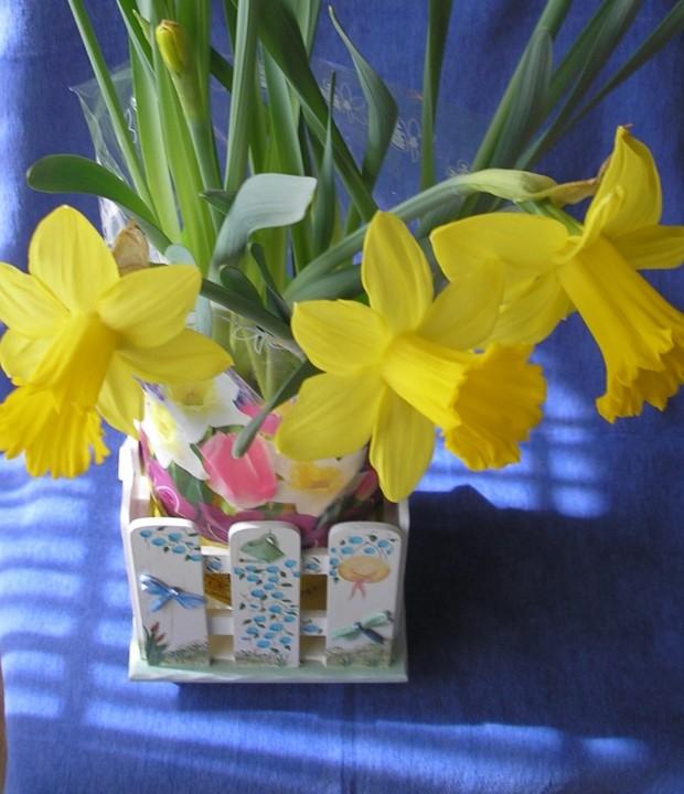 Daffodils indoors