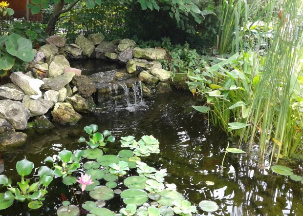 lily pond waterfall
