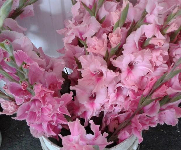 pink glads