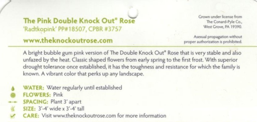 Knock OUt Roses 2 (4)