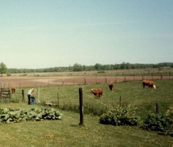 Rhubarb patch (6)
