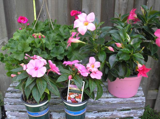 garden flowers on table