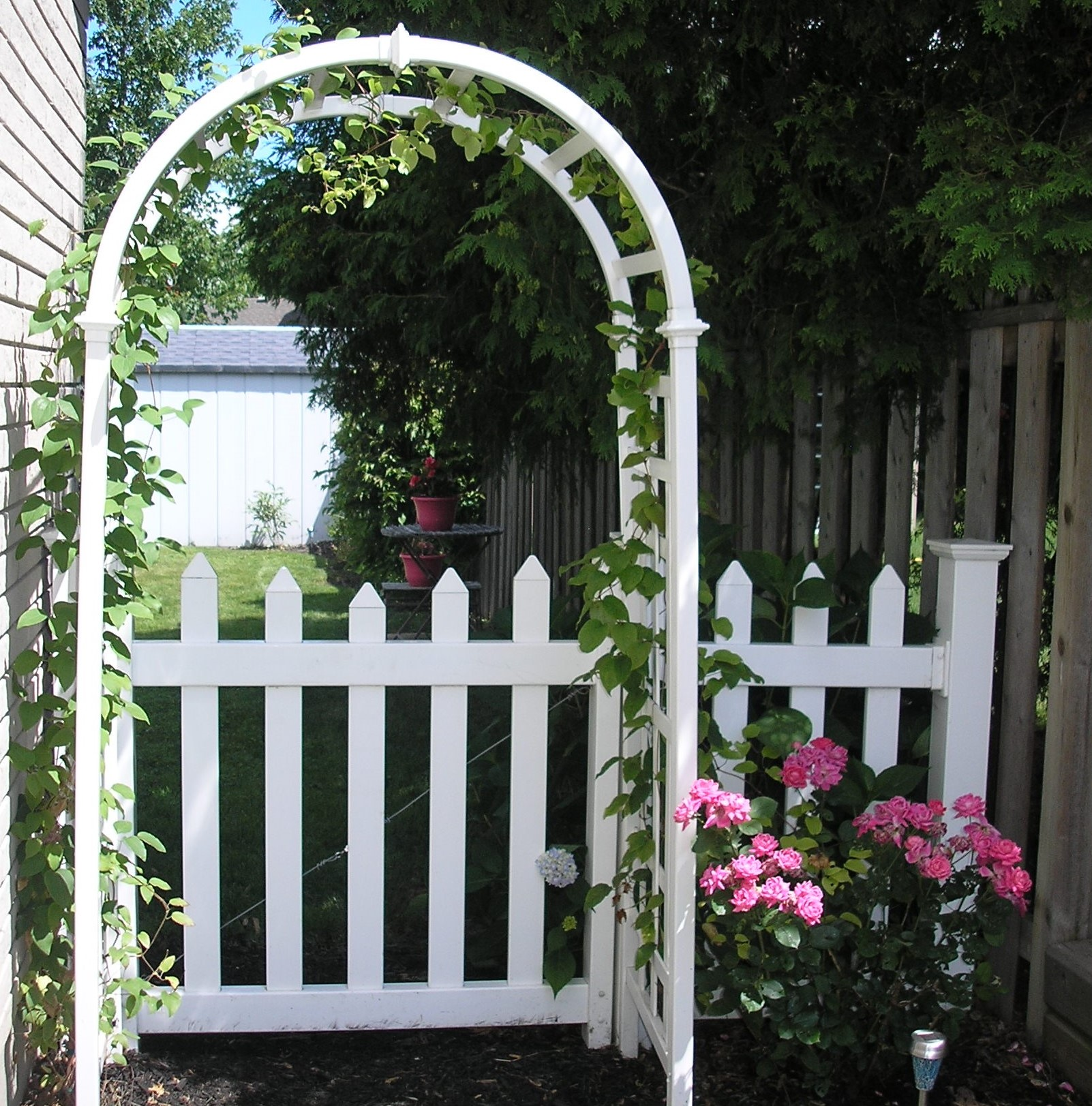 Knock Out Roses on Arbor