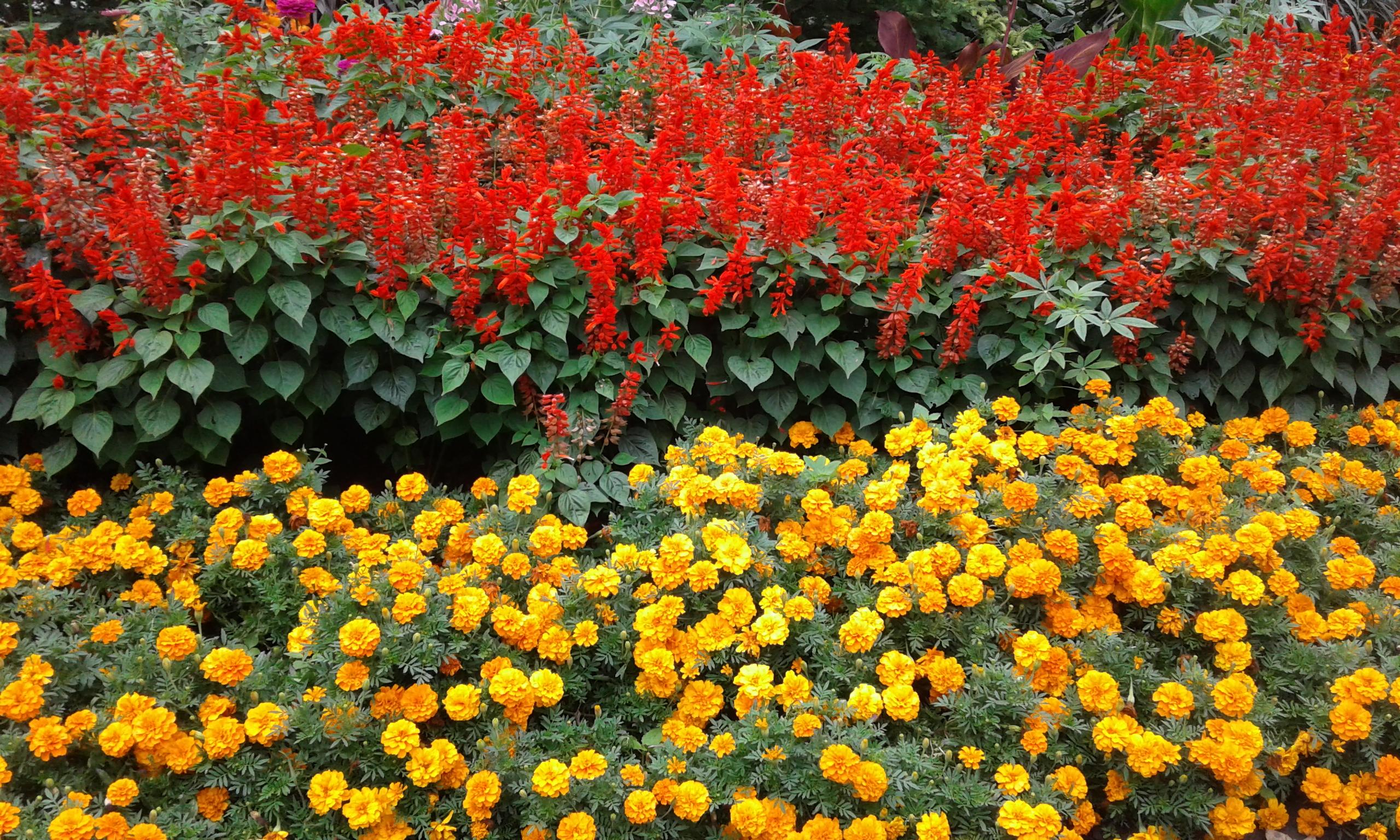 fall flowers Germain Park