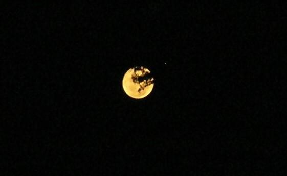 Harvestfest Moon  Harvest Moon