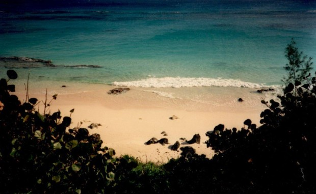 Bermuda pic 8 & 9 (2)