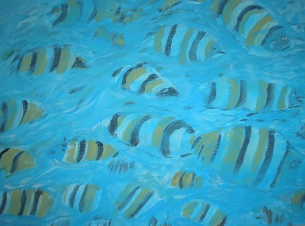 Tropical Fish - AMc