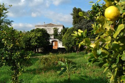 Italian castle with lemon grove