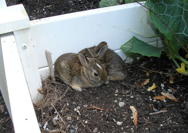 rabbits baby bunnies