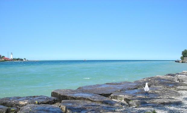 seagull water beach lake