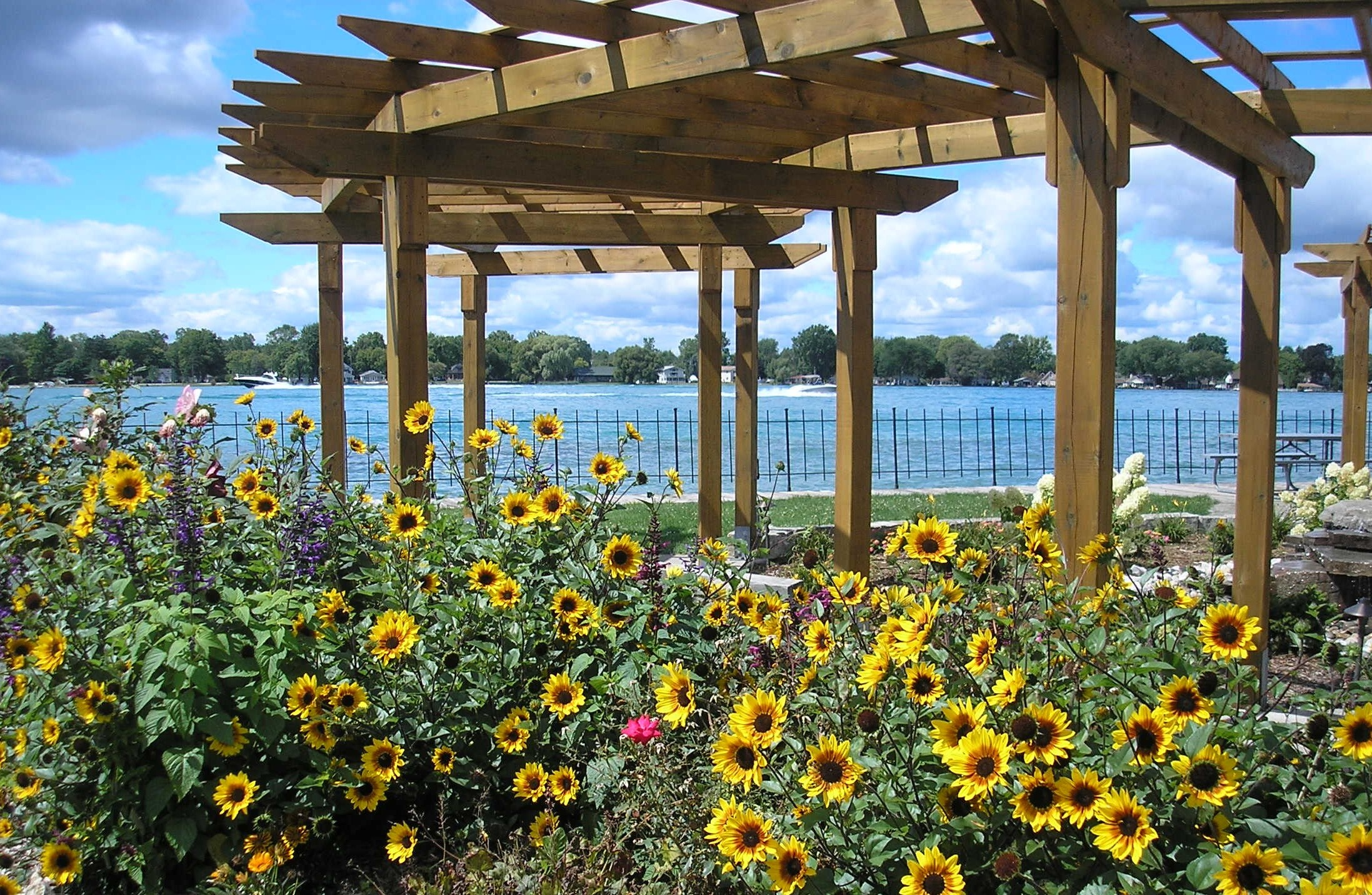 Downriver park - sunflowers