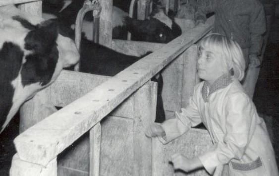 Cow - Sally Ann barn helper (4)