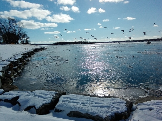 Winter - river - seagulls